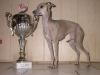 Austellungssieger vom Sausewind mit Pokal