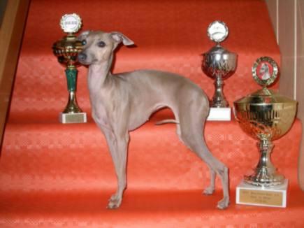 Champion Uletta vom Sausewind