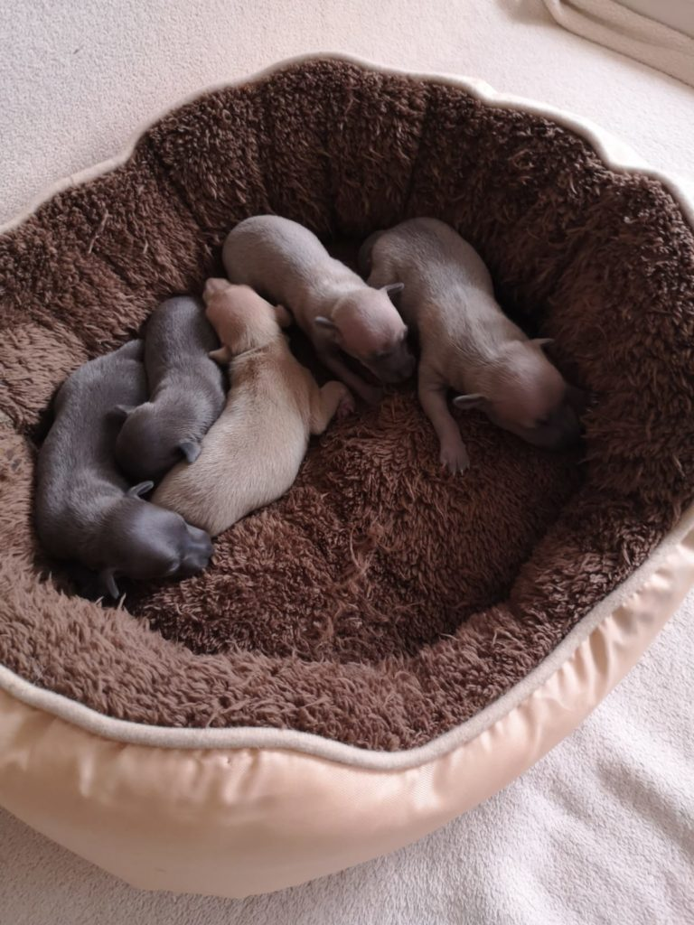 Fünflinge Vom Sausweind