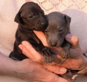 Primus und seine schwarze Schwester.
