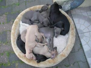 nach der Spielstunde sind alle müde